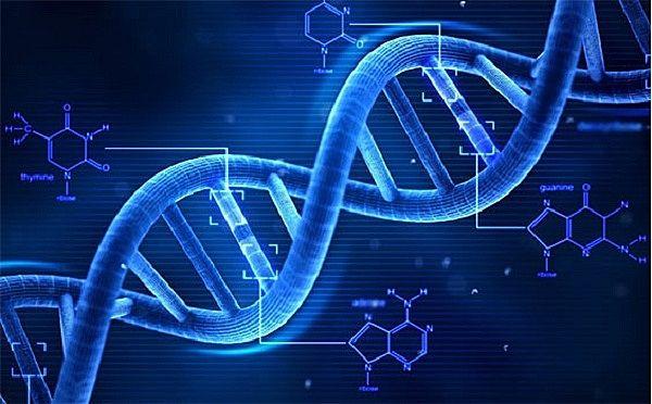 Cấu trúc của nhiễm sắc thể có liên quan đến bệnh vô sinh