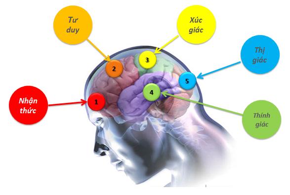 Các vùng tư duy của não bộ
