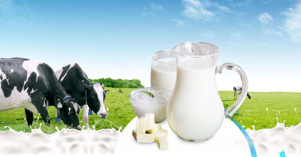 Sữa bò tươi - Nguồn cung cấp canxi giúp bé phát triển chiều cao tối ưu