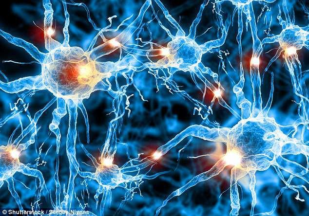 Noron thần kinh càng liên kết dày đặc thì trẻ càng thông minh