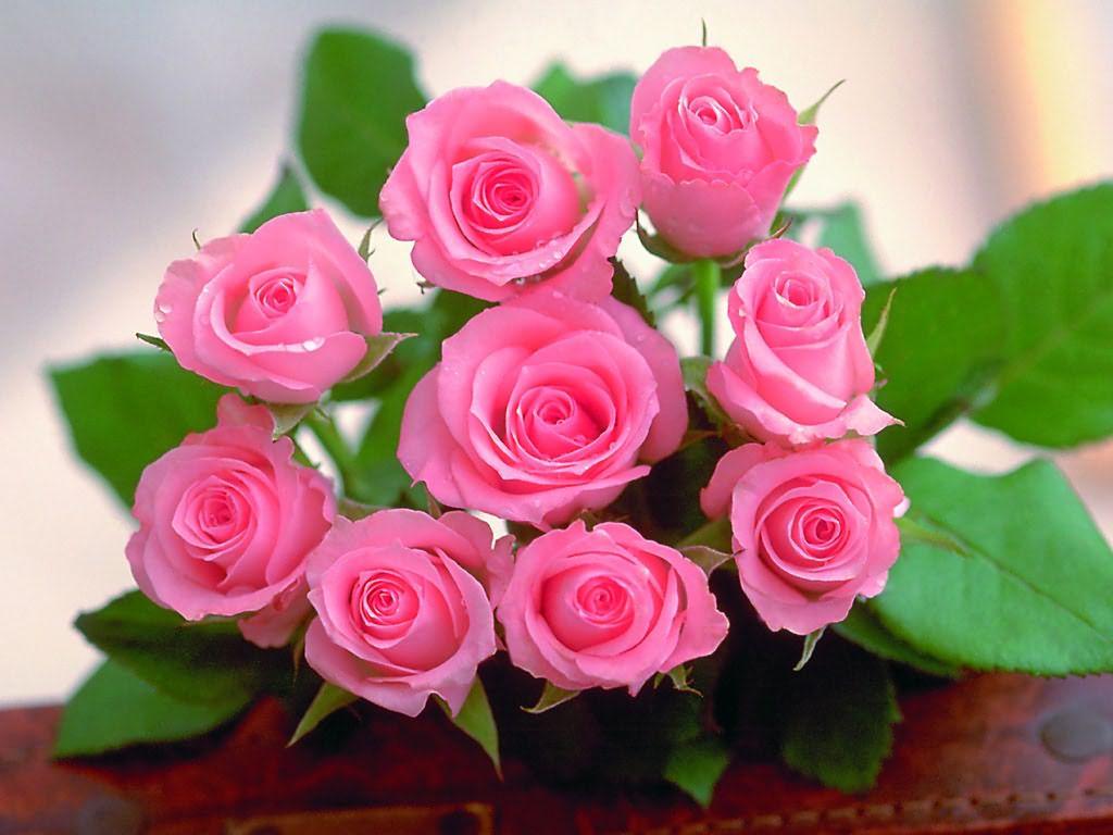 khóm hoa hồng đẹp