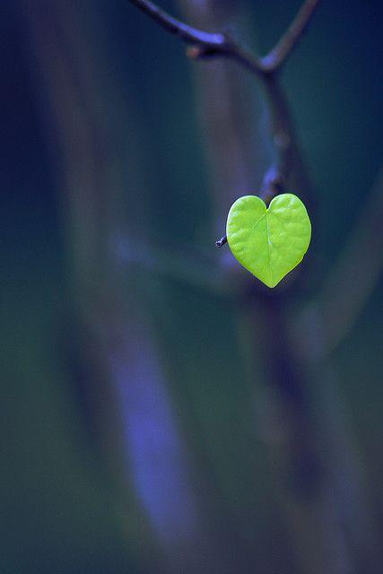 Trái tim yêu thương